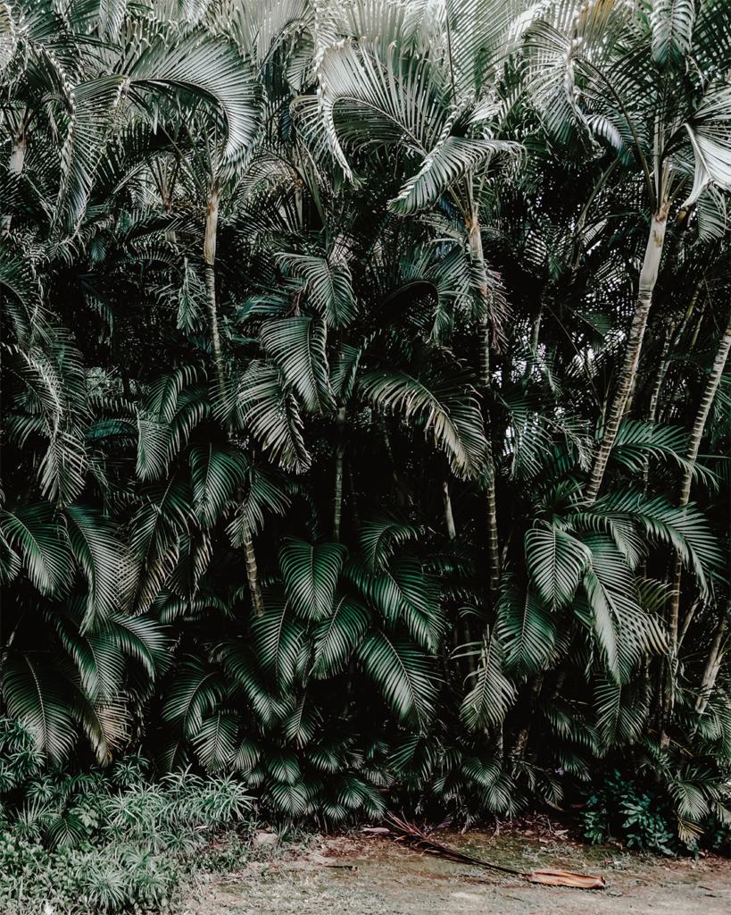 Palmer Maui Hawaii