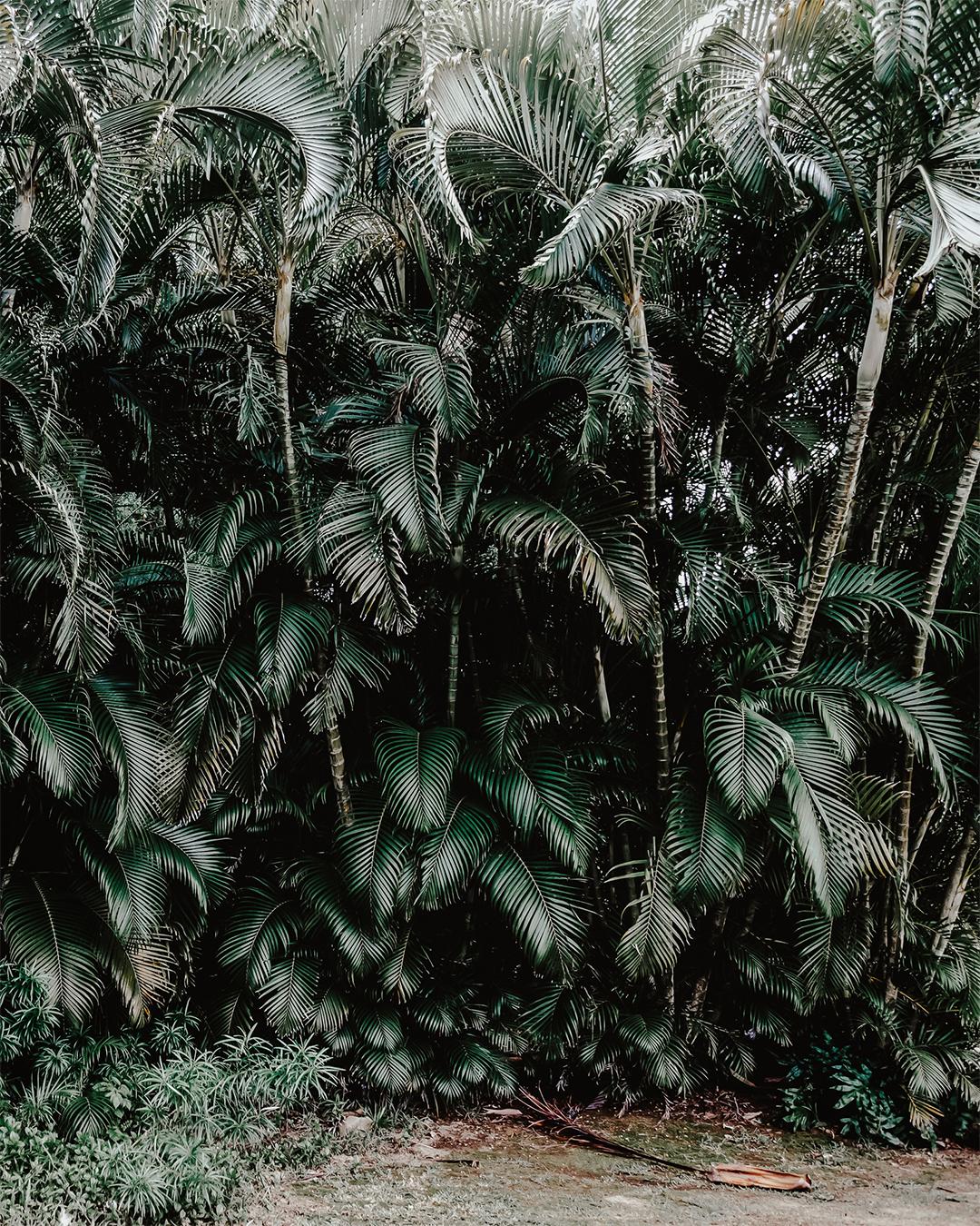 Poeten W.S. Merwin vigde sitt liv åt palmerna på Maui