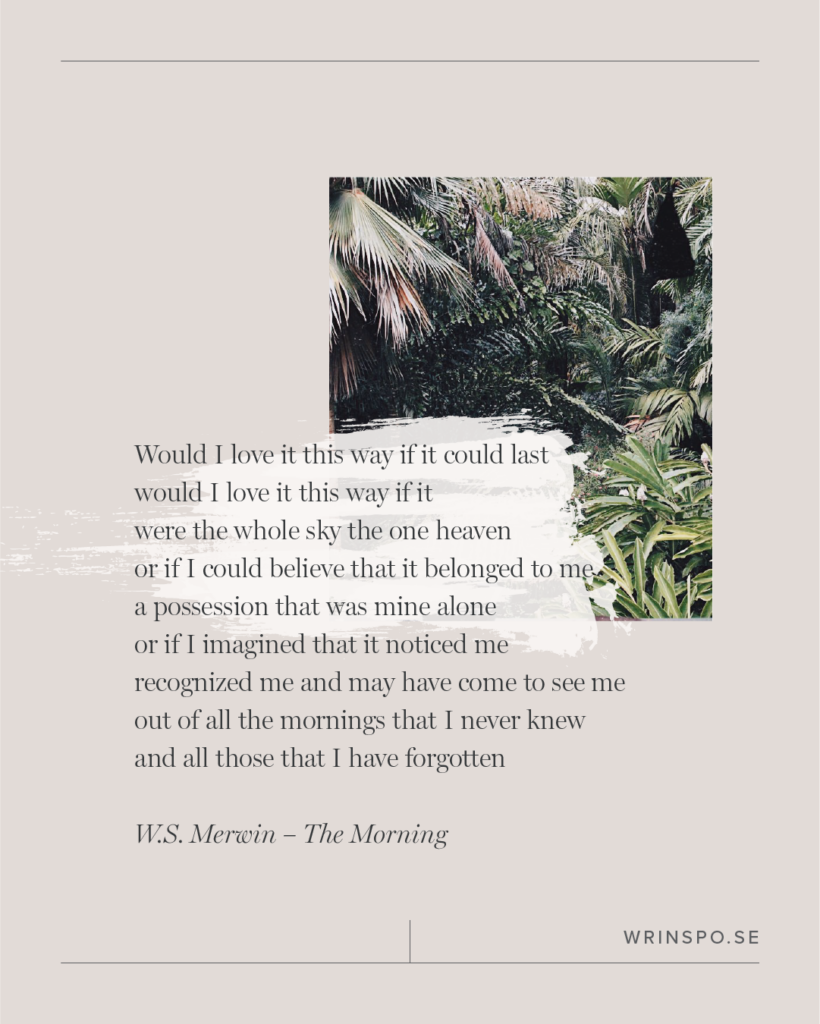 W.S. Merwin – The Morning